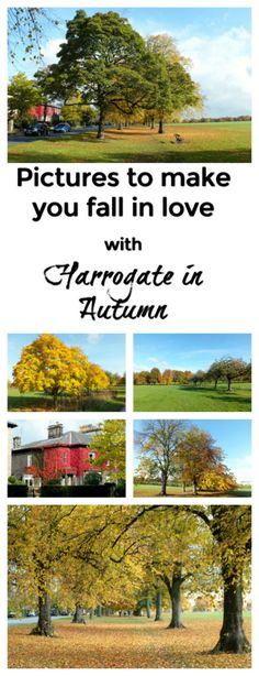 11 pictures to make you fall in love with Harrogate, north Yorkshire, UK in Autumn