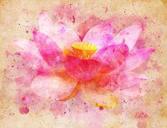 Pink Lotus Flower Abstract by Nikki Marie Smith