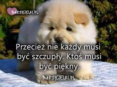 Facebook Funny Dogs, Funny Memes, Motto, Cover Photos, Animals And Pets, Life Lessons, Haha, Life Quotes, Thoughts