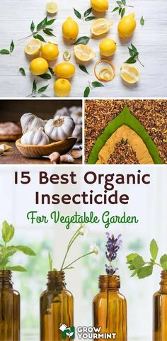 Sometimes the pests are too persistent; sometimes they are entirely resistant (and it even rhymes) to all the things I have done to avert them from my precious plants. Therefore, I'm giving you 15 best organic Insecticide for vegetable garden which I have Natural Insecticide, Natural Pesticides, Insecticide For Plants, Garden Bugs, Garden Pests, Garden Insects, Fruit Garden, Edible Garden, Organic Vegetables