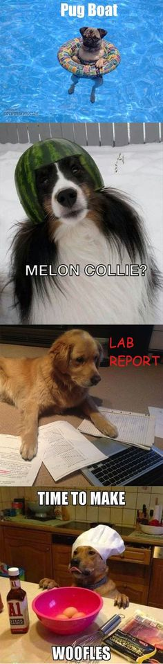 If you're a word nerd and a dog lover like I am, you'll find these dog puns particularly amusing. From the silly to the downright hilarious, these dog puns are gleaned from the fabulous and deep world of pun-filled Dog quotes Funny Animal Memes, Dog Memes, Cute Funny Animals, Funny Animal Pictures, Dog Pictures, Funny Cute, Funny Dogs, Funny Memes, Funny Kitties