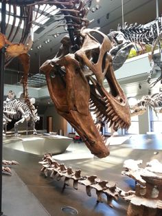 T.rex - Los Angeles Natural History Museum