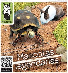 Con los estilos de vida cada vez más complicados y reglamentaciones en algunos condominios, cada vez son más los amantes de los animales que optan por tener otros géneros que ocupan menos espacio y no hacen ruidos, como los conejos y las tortugas.