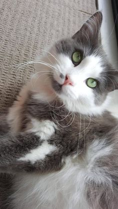 New post on meowcutecats