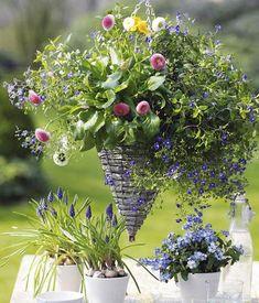 zum nachpflanzen balkonkasten mit hortensien und lobelie balkonk sten garten und schachteln. Black Bedroom Furniture Sets. Home Design Ideas