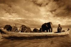 More than 14 years, photographer Gregory Colbert (Gregory Colbert) traveled with expeditions to India, Egypt, Africa and Antarctica, collecting material for his monumental canvases. Description from tkshare.com. I searched for this on bing.com/images