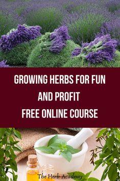 The Complete Online Guide To Growing and Harvesting Organic Herbs in Small Spaces and Pots! #growyourown #vegetablegardening #vegetablegarden #herbgardening #herbgarden #seedstarting #herbgardenideas #herbgardendesign #herbgardenindoor