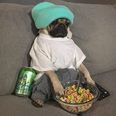 """Let's binge watch something"" -#lovepugever #pug #pugsofinstagram #pugs #pugpuppies #pugpuppy #puggle #puglia #puglife #pugilato #puglicious #puglive #pugdaily #pugchat #pugsrock #pugrescue #pugpower #pugster #pughugs #pugsproud #pugliatop #pugtohug #puglove #puglyfe"