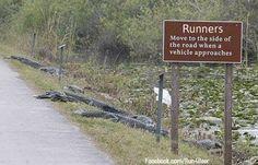 """""""Gator Path"""" found on Facebook"""