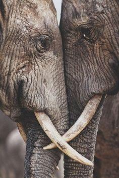 Wundervolle Tiere strahlen stärke aus und Macht