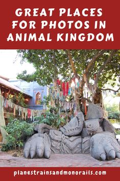 10 Best Places for Photos at Disney's Animal Kingdom