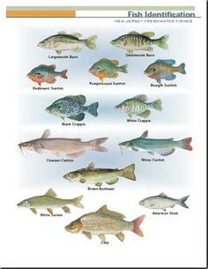 1000 images about fantastic fish from florida pond for Nj freshwater fishing