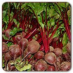 In my garden: Red Ace F1 Hybrid Beet (Red Ace Beet OG)