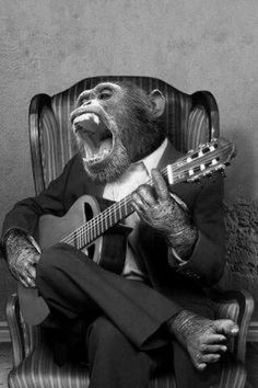 vintage pictures vintage everyday: 20 Funny Vintage Photos Show Animals Playing Musical Instruments as People Vintage Humor, Vintage Abbildungen, Funny Vintage Photos, Funny Photos, Vintage Posters, Funny Animal Pictures, Funny Animals, Cute Animals, Guitar Photos