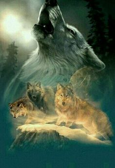 Wolf Photos, Wolf Pictures, Beautiful Wolves, Most Beautiful Animals, Indian Wolf, Native American Wolf, Wolf Artwork, Wolf Painting, Fantasy Wolf