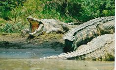 Gambela National Park African Union, Wild Life, Continents, National Parks, Survival, Places, Animals, Image, Animais