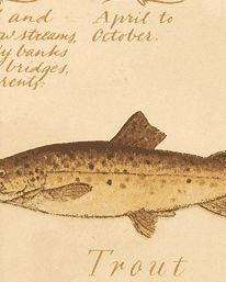 Tapet European Fish från Lewis & Wood