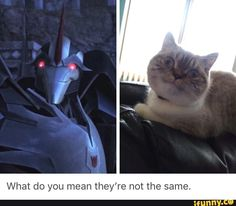 AAHAHA!! XD is the same stupid expression  Well, the cat is not stupid XD