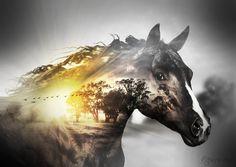 With thanks: HorseQuarter Horse stock 1 - dark bay/black BackgroundFrosty morning sunrise Bird brushshadowhousecreations.blogspot.… Light brushwww.obsidiandawn.com/