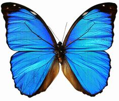 Beautiful+butterfly+pictures1.jpg 1.024×872 piksel