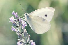 Deleita tus ojos con los hermosos colores de estas mariposas.