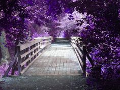 Le Purple Path  haha!!!! ^the french would die if they saw a sentence like that xD
