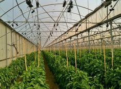 #CEICKOR, training #Mexico's protected #agriculture experts.  #greenhouse