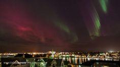 Pink Auroras over Reykjavik pond in the city center.