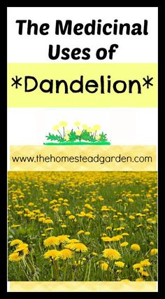 Medicinal Uses of Dandelion - The Homestead Garden~ this is great bc we have a million of these in the yard
