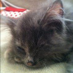 Lila sleeping