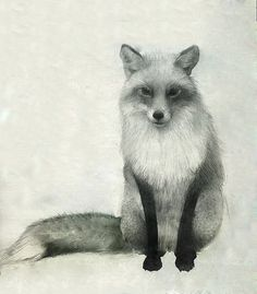Fox Drawing by annmarshallart on Etsy, $50.00