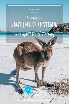 3 weeks in South West Australia: a complete travel itinerary. In this article, we'll tell you all about the route we have taken in South West Australia and give you tips on what to see along the way. It takes you through the Margaret River region, the Gol Brisbane, Melbourne, Sydney, Roadtrip Australia, Australia Travel Guide, Australia Beach, Australia Holidays, Esperance Australia, Travel Route