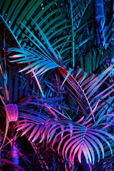 color | green + blue + purple palm fronds
