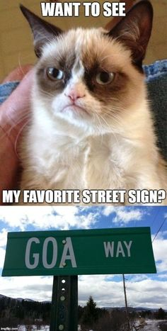 Grumpy Cat Quotes, Funny Grumpy Cat Memes, Funny Animal Jokes, Crazy Funny Memes, Really Funny Memes, Cute Funny Animals, Funny Relatable Memes, Funny Animal Pictures, Funny Cats