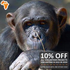 Volunteer Work, Volunteer Abroad, Jane Goodall, Chimpanzee, Gap Year, Volunteers, South Africa, Join, App
