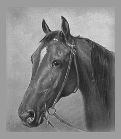 Image result for pictures of horses