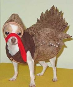 turkey dog -- I want this to happen!! I need to borrow someone's dog! @Jordan Kent - can i borrow Tuna??