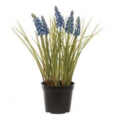 Intratuin kunstplant Blauw druifje blauw H 28 cm Plants, Products, Plant, Beauty Products, Planting, Planets