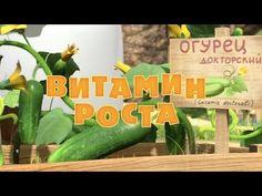 Маша и Медведь - Витамин роста (Серия 30) - YouTube
