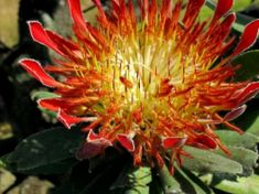 Click for full image African Plants, Ecology, Trees To Plant, Shrubs, Habitats, Flora, Image, Plants, Environmental Science