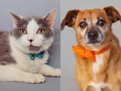 Adoptable Pets of the Week Adorable Animals, Funny Animals, Types Of Animals, Exotic Birds, Animal House, I Love Cats, Rescue Dogs, Beautiful Creatures, Mammals