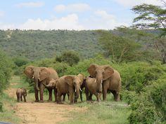 Elephant family walking around at Sosian, Laikipia, Kenya