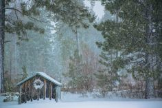 Merry Christmas - Merry Christmas! Christmas wreath in a winter snowstorm... from the Blue Mountains of NE Oregon