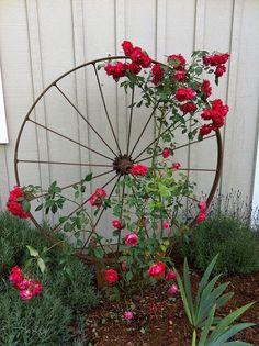 Wagon Wheel as Trellis | Backyards