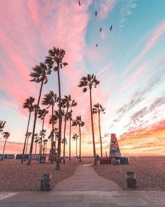 ideas palm tree california sunset beautiful for 2019 California Palm Trees, California Sunset, California Tumblr, Visit California, Los Angeles California, California Travel, Wallpapers Rosa, Usa Tumblr, Beach Room