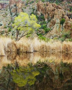 Grateful that the harsh Arizona winter weather is finally subsiding enough to get outside.(sarcasm)  #winter #arizona #travel #picoftheday #trees #color #yellow #reflection #desert #az #reeds #pond #love #hiking #family #adventure #photo #photography