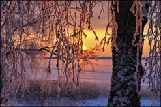 Winter morning in Finland ... by Valtteri Mulkahainen on 500px