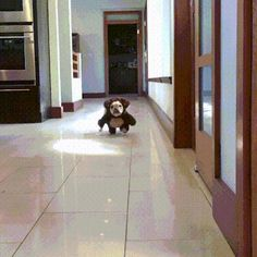Can't stop laughing Dogs And Puppies, Happy Halloween Gif, Dog Halloween, Funny Animals, Cute Animals, Animal Memes, Gifs, Legs Video, French Bulldogs