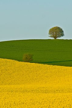 thursday - on the house - yellow and green with some blue Two Fields – Lars Klottrup Nature Landscape, Landscape Photos, Abstract Landscape, Landscape Paintings, Landscape Photography, Nature Photography, Beautiful World, Beautiful Places, Beautiful Pictures