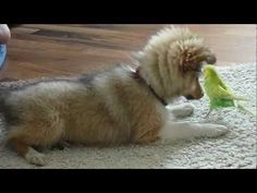 Puppy and Bird Friendship.- Jukin Media Verified (Original) * For licensing / permission to use: Contact - licensing(at)jukinmediadotcom